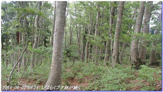160602_kurogogoe_norikuradake_023