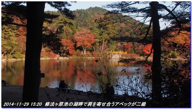 141129_shinrinsyokubutuen_taishim_2