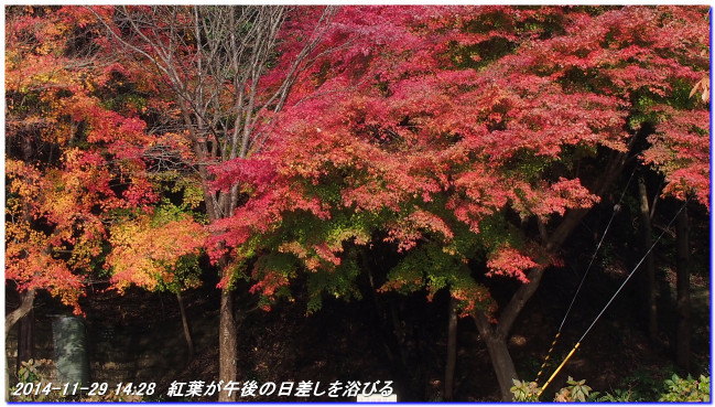 141129_shinrinsyokubutuen_taishimit