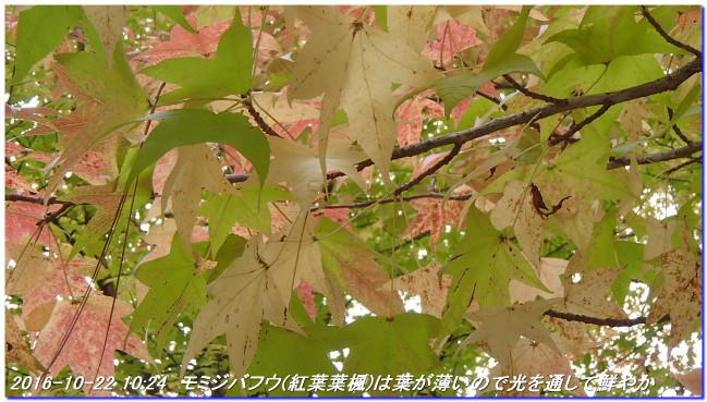 161022_shinrinsyokubutuen_binasub_3