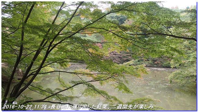 161022_shinrinsyokubutuen_binasubri