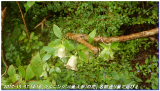 171007_tanjyosan_tigogahakayama_035