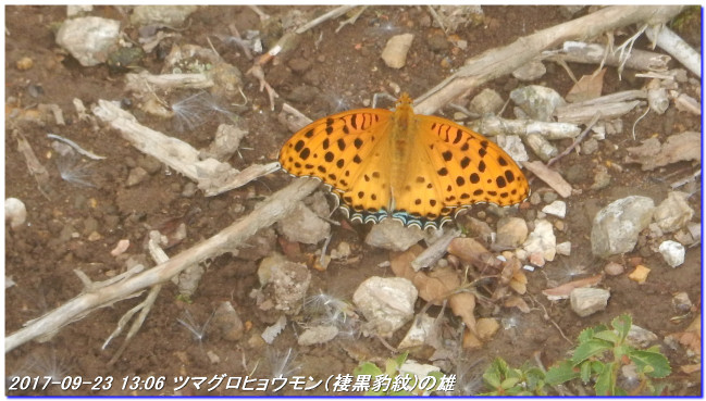 170923_haiya_kumotoriyamanishione_2