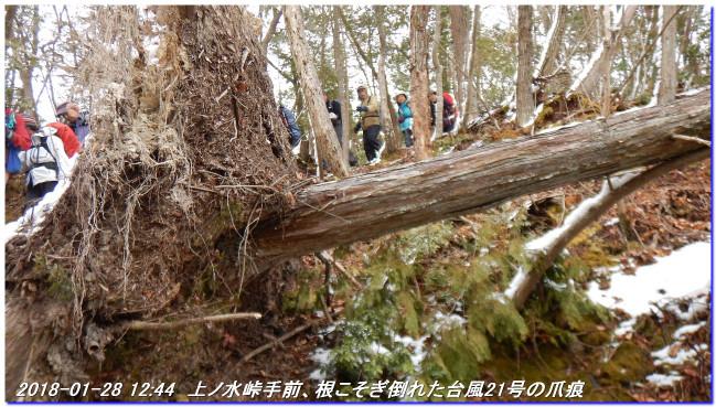 180128_sugisakanishione_sawayama__2