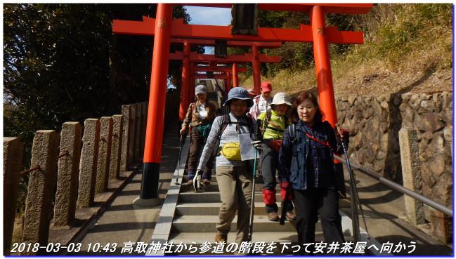 180303_myohoji_takatoriyama_kikus_4