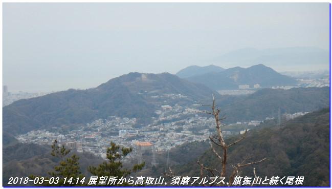 180303_myohoji_takatoriyama_kikus_6
