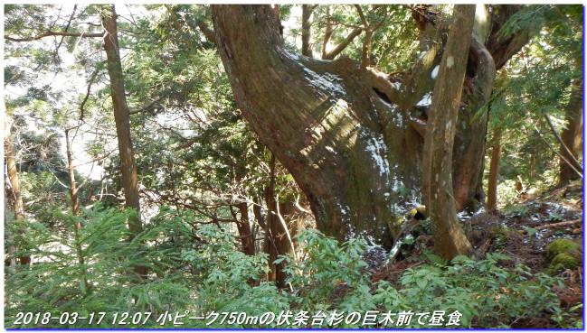 180317_sanbonsugitanbo_019