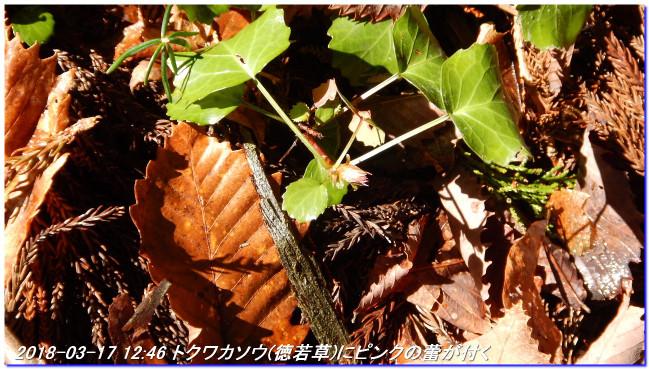 180317_sanbonsugitanbo_021