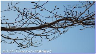180317_sanbonsugitanbo_038