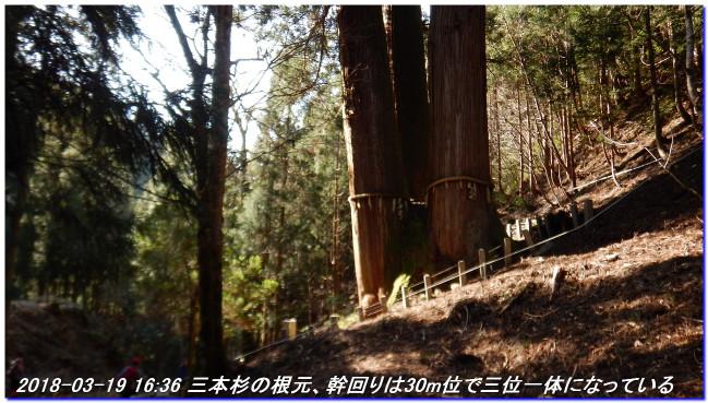 180317_sanbonsugitanbo_053