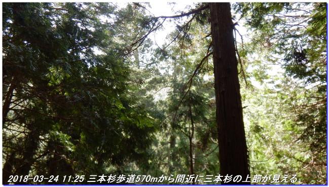180324_sanbonsugi2plan_01_2