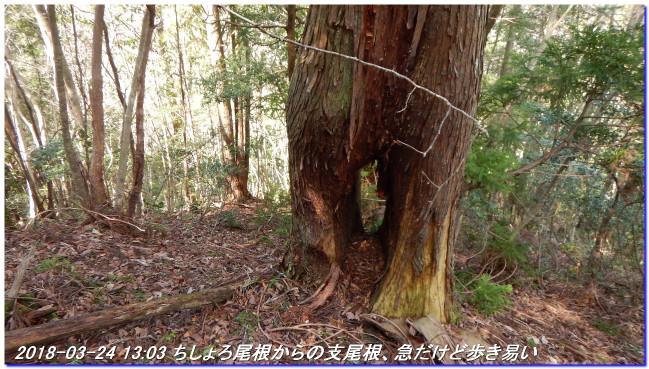 180324_sanbonsugi2plan_03_2