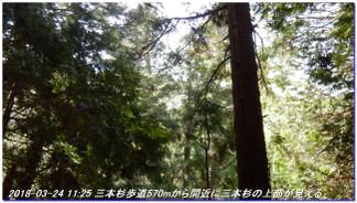 180324_hanasenosanbonsugi2_01