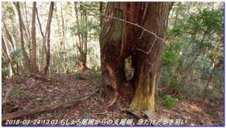 180324_sanbonsugi2plan_03