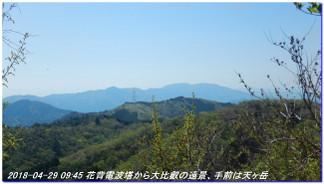 180429_hanasetoge_momoitoge_syakuna