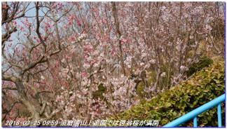 180325_shioya_hatafuriyama_sumaal_2