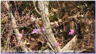 180325_shioya_hatafuriyama_sumaal_6