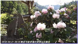 180421_hanase_sanbonsugi_tanbo_012