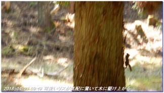 180421_hanase_sanbonsugi_tanbo_018