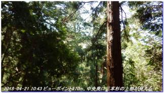 180421_hanase_sanbonsugi_tanbo_032