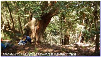 180421_hanase_sanbonsugi_tanbo_039
