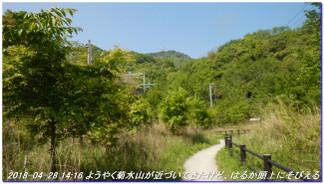 180428_myohoji_takatoriyama_kikus_5
