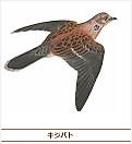 180517_kijibato
