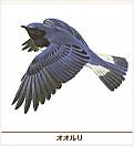 180517_ooruri