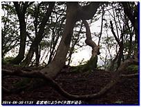140830_31_misakatoge_kohokubunaga_2
