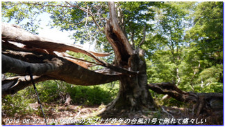 180602_03_ishidagawadam_sanjyoda_12