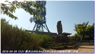 180428_myohoji_takatoriyama_kikus_3