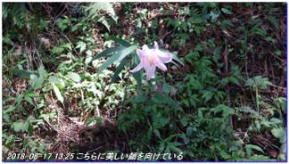 180617__tyoishimiti_kudoyama_kiih_7