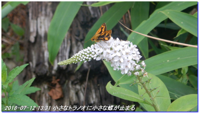 180712_kinenhidai_rokkosaikoho_10