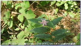 180716_kinenhidai_rokkosaikoho_036