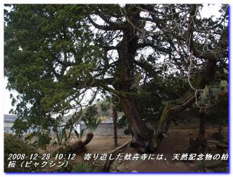 081228_kumanokodo_p2_010