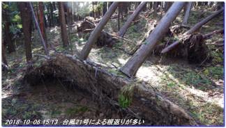 181006_sugisakakuti_mineyama_sai_10