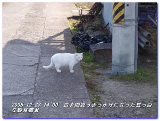 081227_kumanokodo_p1_030