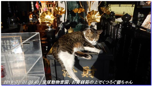 190101_hatumoude_hatuhinode_05