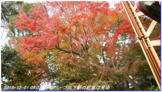 181201_mayasan_mikuniike_kinenhidai