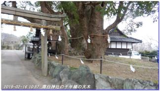 190216_kainan_fujishirosaka_kiimi_4