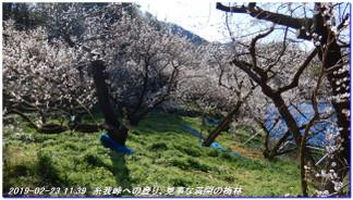 190223_kiimiyahara_itogatoge_yuas_6