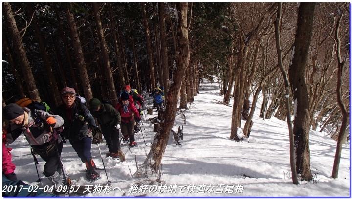 170204_tengusugi_seryotoge_04