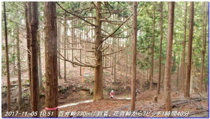 171105_hanasetoge_syakunageone_014