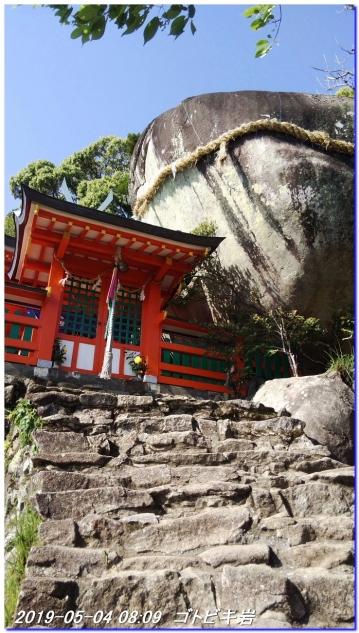 190504_gotobiki_hayatama_nati_006