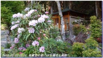 190505_ookumotori_sakuratyaya_017