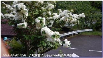 190505_ookumotori_sakuratyaya_037