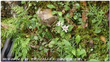 190924_hatenashikoe_007