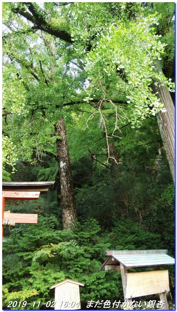 191102_takimatanotaki_ungetusaka_115