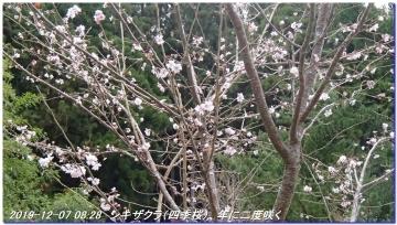 191207_nakahechi_tikatuyu_hossinmon_021