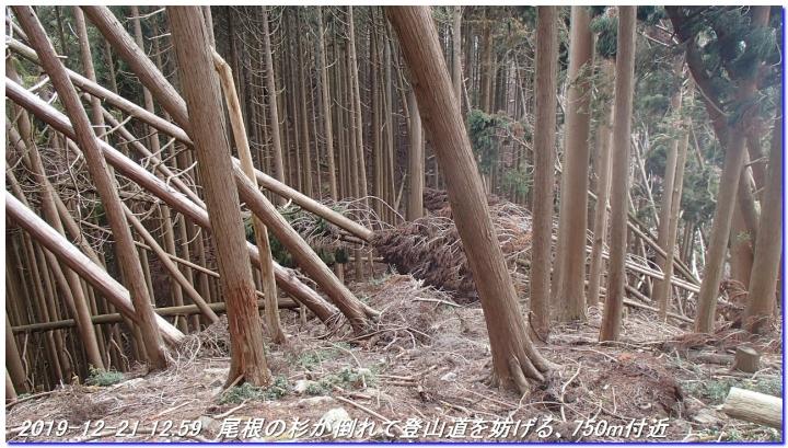 191221_momoitoge_hanasetoge_tengusugi_03